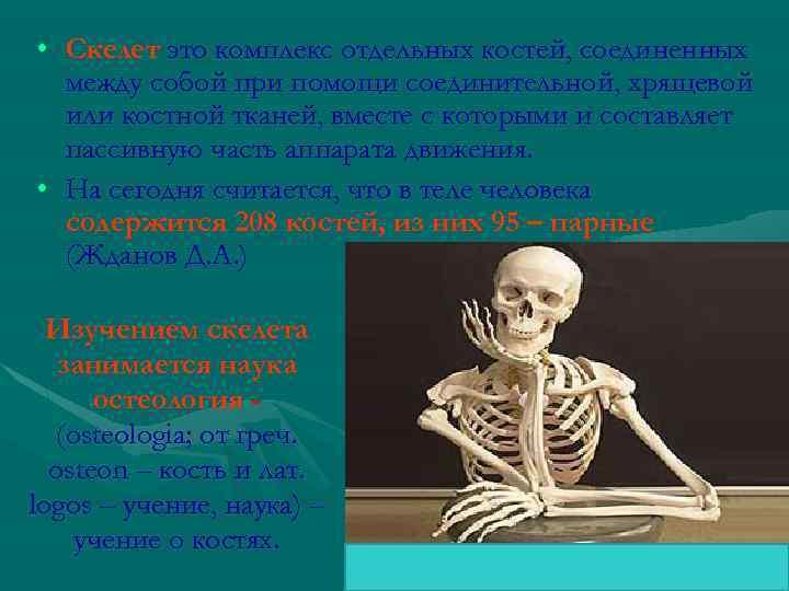 • Скелет это комплекс отдельных костей, соединенных между собой при помощи соединительной, хрящевой
