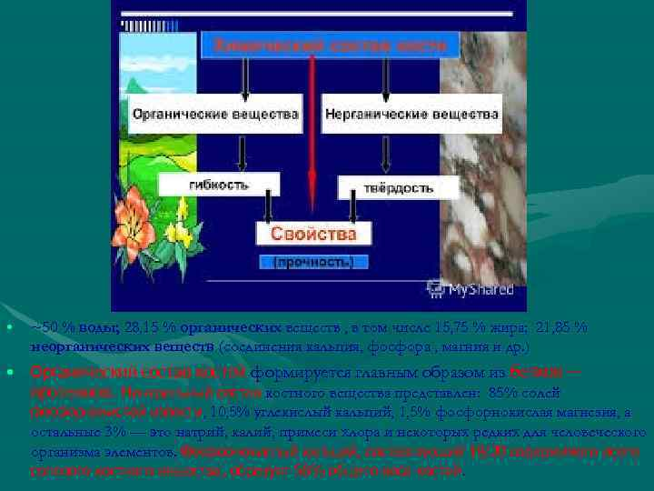 • ~50 % воды; 28, 15 % органических веществ , в том числе