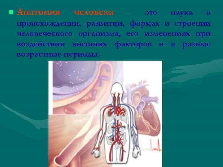 n Анатомия человека – это наука о происхождении, развитии, формах и строении человеческого организма,