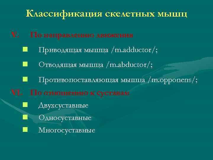 Классификация скелетных мышц V. По направлению движения n Приводящая мышца /m. adductor/; n Отводящая
