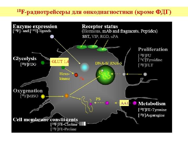 18 F-радиотрейсеры для онкодиагностики (кроме ФДГ)