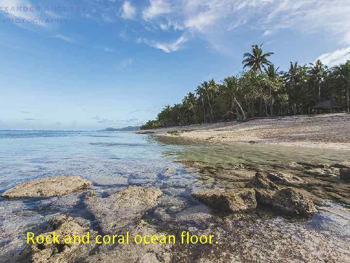 Rock and coral ocean floor.