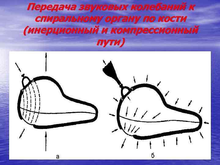 Передача звуковых колебаний к спиральному органу по кости (инерционный и компрессионный пути)