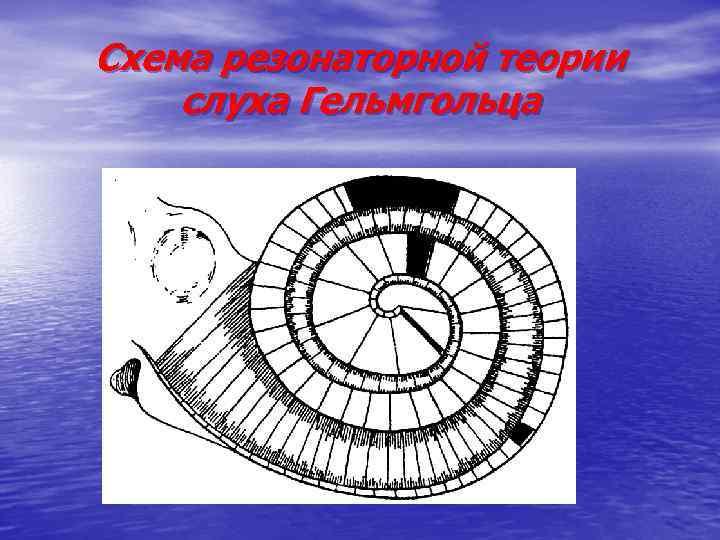 Схема резонаторной теории слуха Гельмгольца