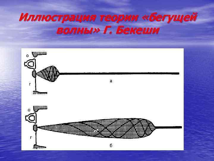 Иллюстрация теории «бегущей волны» Г. Бекеши