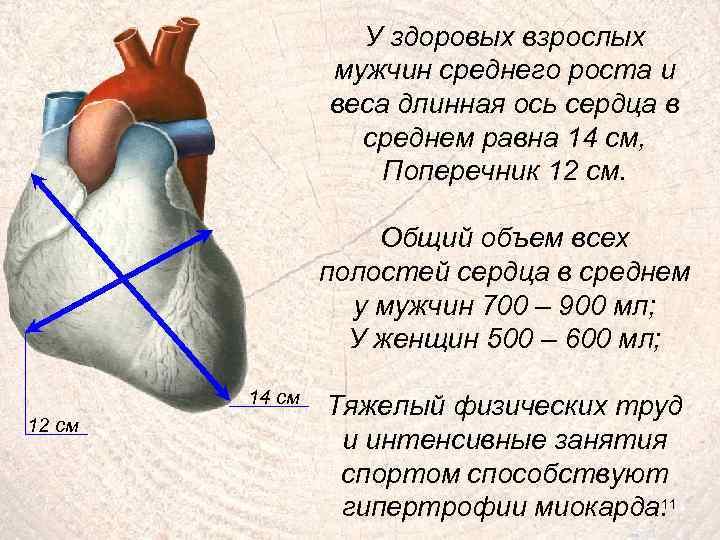 У здоровых взрослых мужчин среднего роста и веса длинная ось сердца в среднем равна