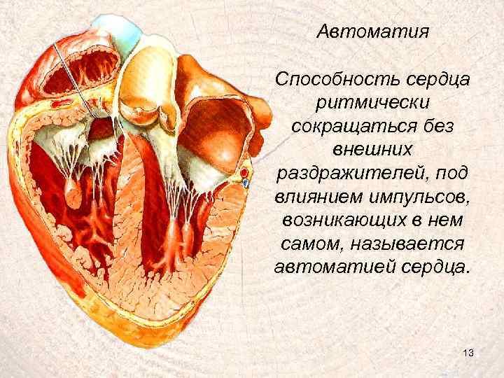 Автоматия Способность сердца ритмически сокращаться без внешних раздражителей, под влиянием импульсов, возникающих в нем