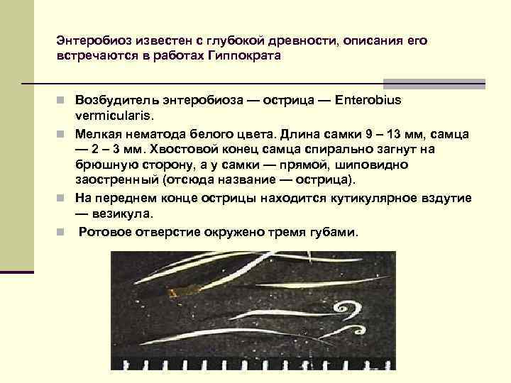 Энтеробиоз известен с глубокой древности, описания его встречаются в работах Гиппократа n Возбудитель энтеробиоза