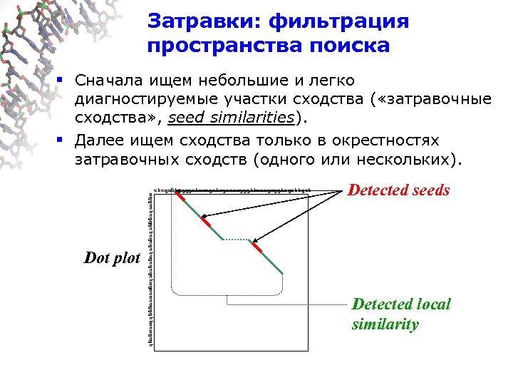 Затравки: фильтрация пространства поиска § Сначала ищем небольшие и легко диагностируемые участки сходства