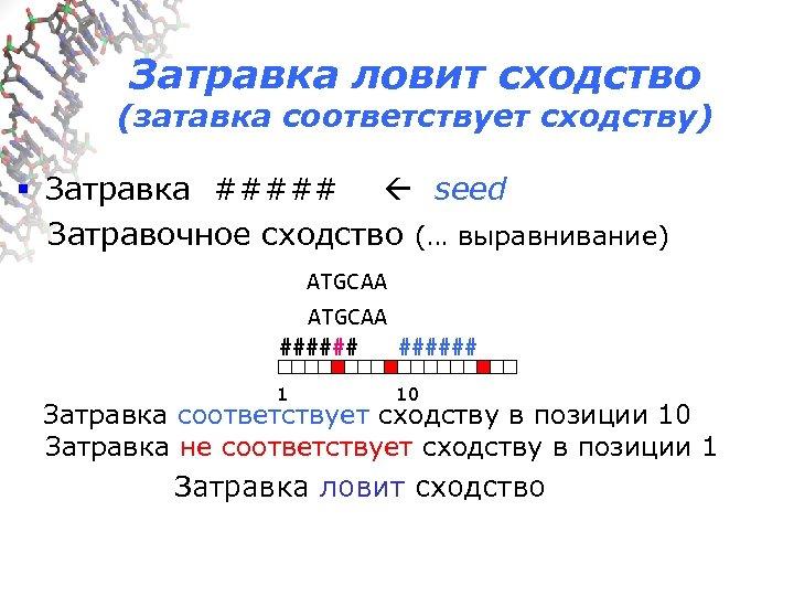 Затравка ловит сходство (затавка соответствует сходству) § Затравка ##### seed Затравочное сходство (… выравнивание)