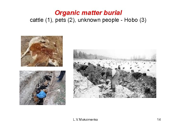 Organic matter burial cattle (1), pets (2), unknown people - Hobo (3) L. V.