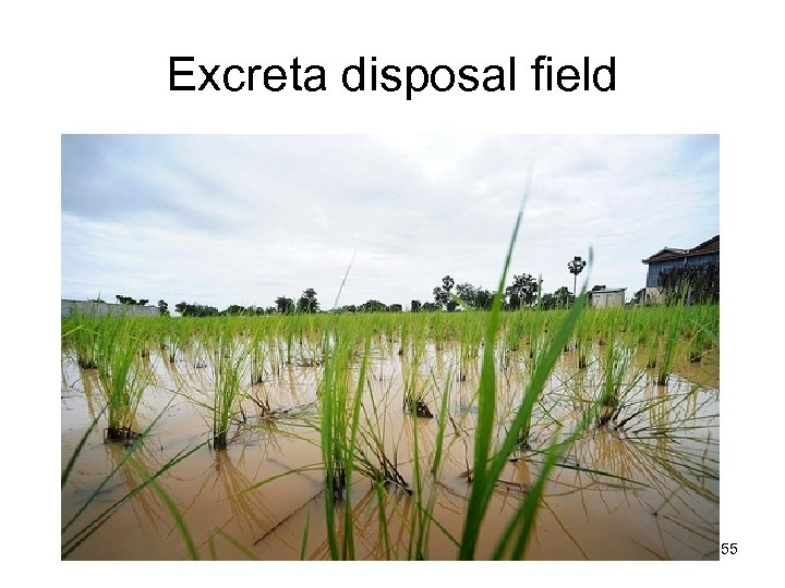 Excreta disposal field L. V. Maksimenko 55