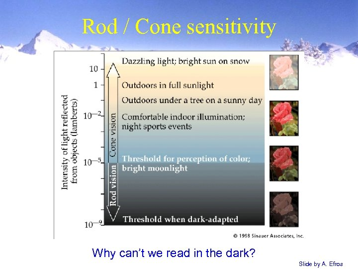 Rod / Cone sensitivity Why can't we read in the dark? Slide by A.