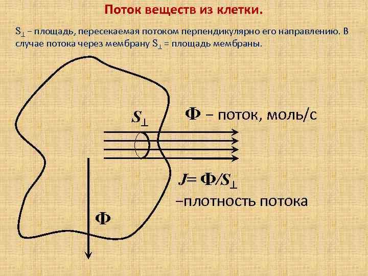 Поток веществ из клетки. S − площадь, пересекаемая потоком перпендикулярно его направлению. В