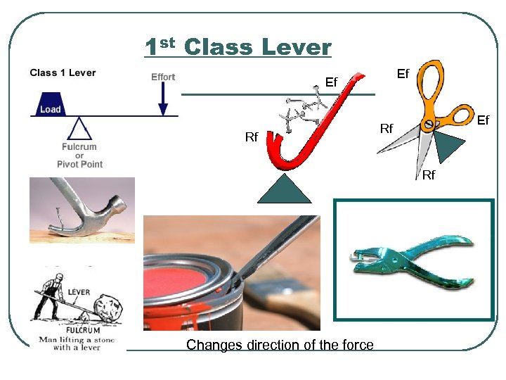 1 st Class Lever Ef Ef Rf Rf Changes direction of the force