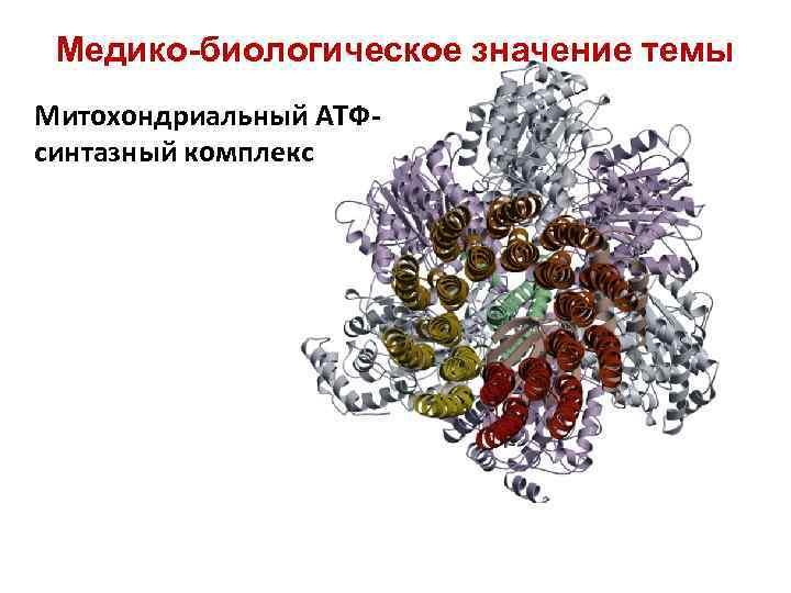 Медико-биологическое значение темы Митохондриальный АТФсинтазный комплекс