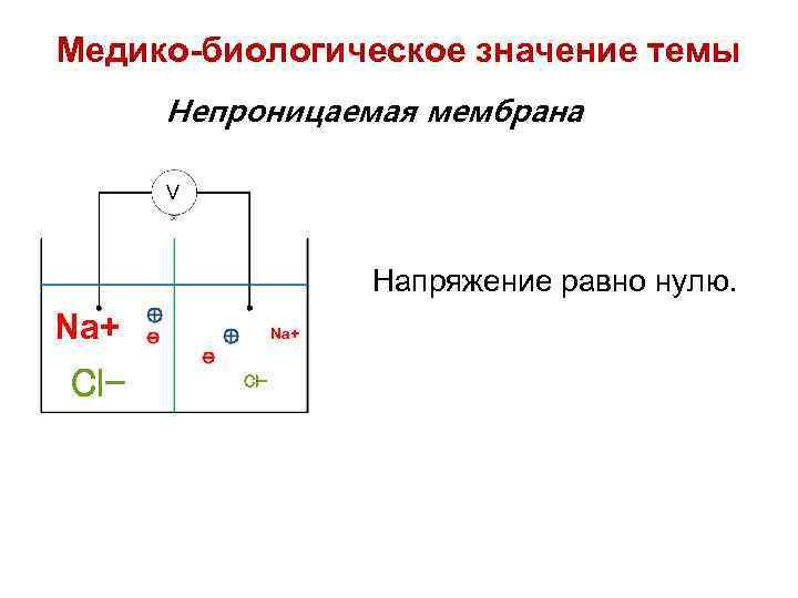 Медико-биологическое значение темы Непроницаемая мембрана V Напряжение равно нулю. Na+ Cl-