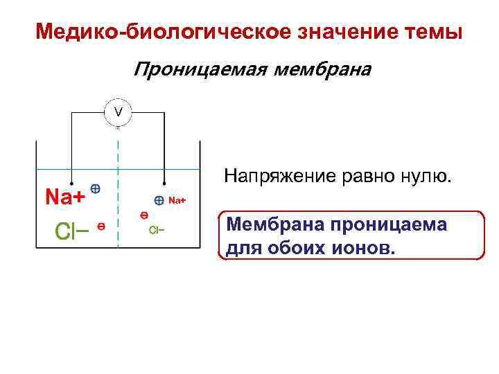 Медико-биологическое значение темы Проницаемая мембрана V Напряжение равно нулю. Na+ Cl- Мембрана проницаема для