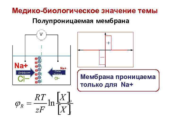 Медико-биологическое значение темы Полупроницаемая мембрана V Na+ Диффузия Cl- Na+ Силы Кулона Cl- Мембрана