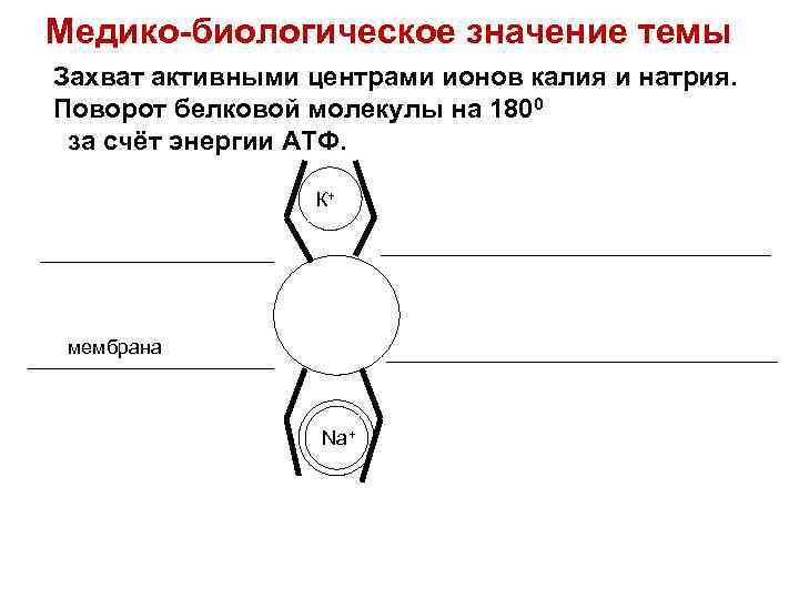 Медико-биологическое значение темы Захват активными центрами ионов калия и натрия. Поворот белковой молекулы на