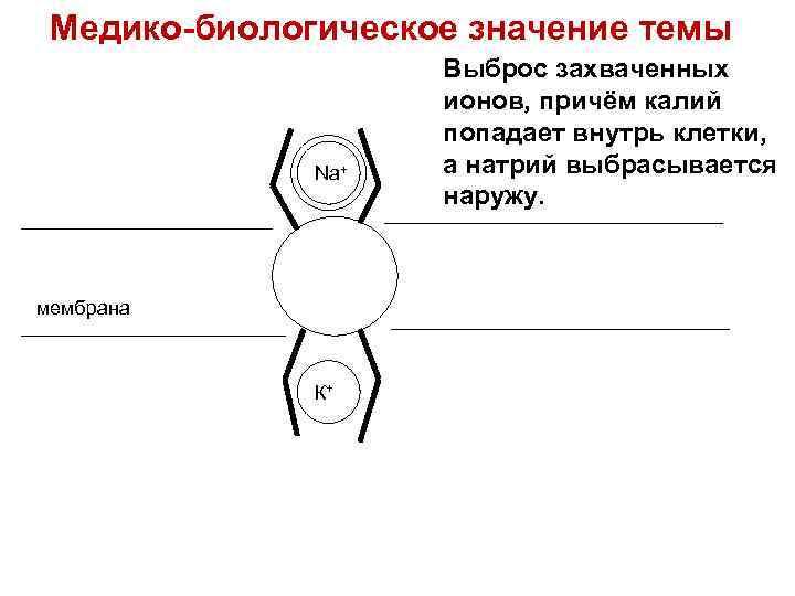 Медико-биологическое значение темы Na+ мембрана К+ Выброс захваченных ионов, причём калий попадает внутрь клетки,