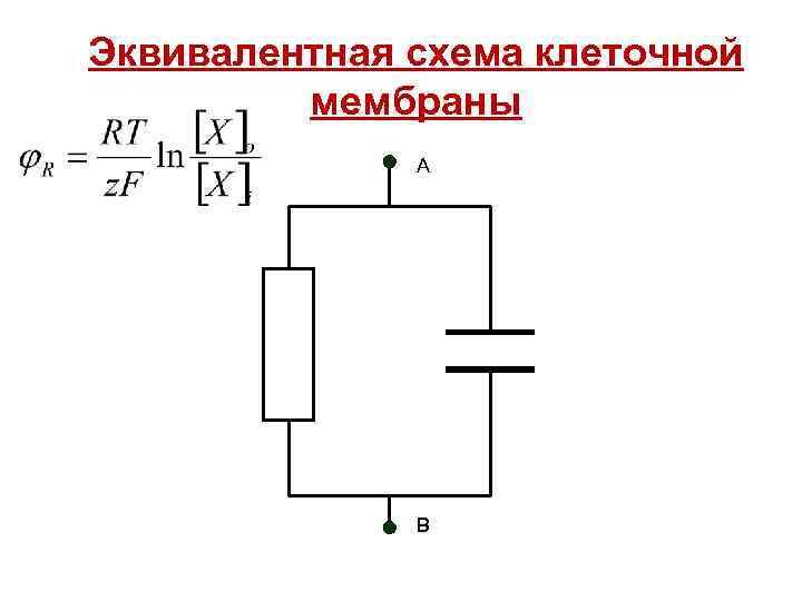 Эквивалентная схема клеточной мембраны А В