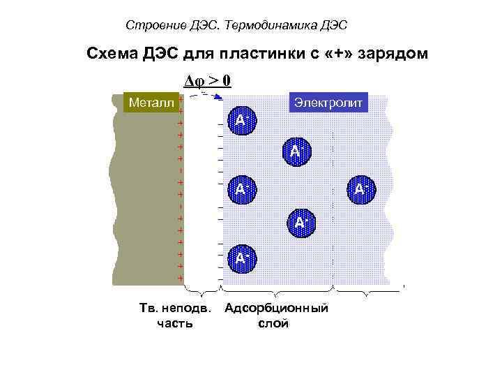 Строение ДЭС. Термодинамика ДЭС Схема ДЭС для пластинки с «+» зарядом Δφ > 0