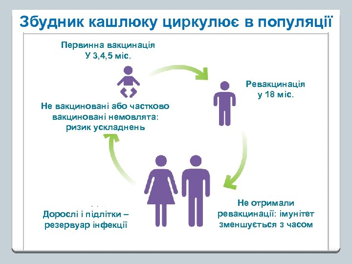 Збудник кашлюку циркулює в популяції Первинна вакцинація У 3, 4, 5 міс. Ревакцинація у