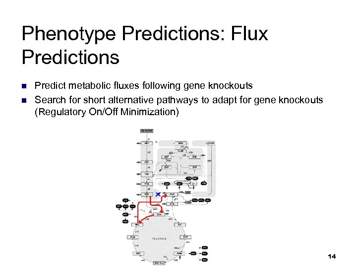 Phenotype Predictions: Flux Predictions n n Predict metabolic fluxes following gene knockouts Search for