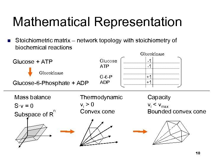 Mathematical Representation n Stoichiometric matrix – network topology with stoichiometry of biochemical reactions Glucokinase