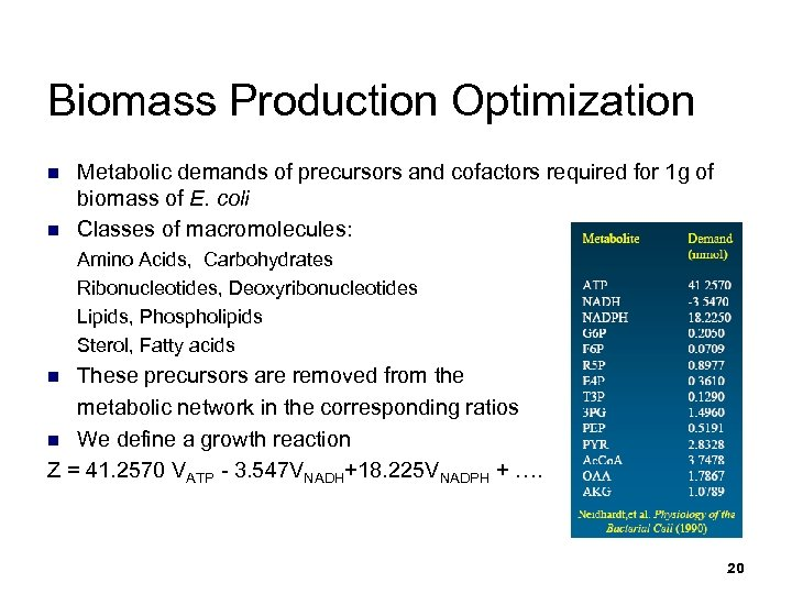 Biomass Production Optimization n n Metabolic demands of precursors and cofactors required for 1