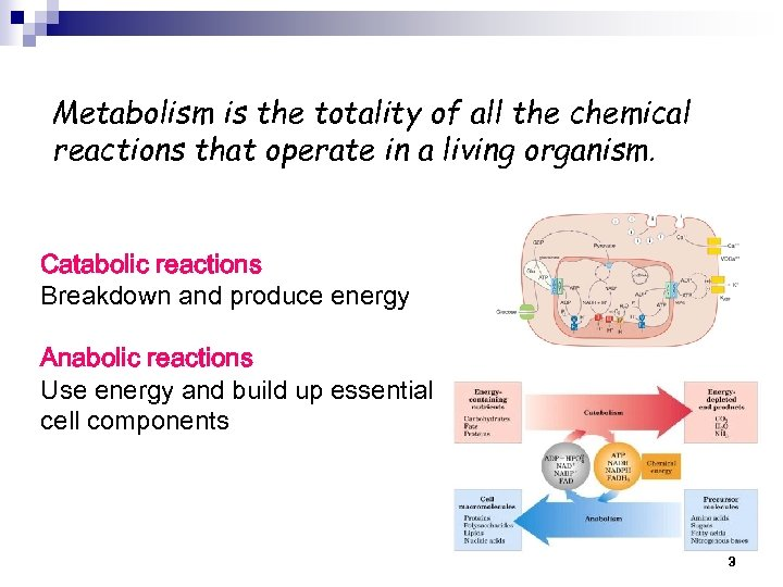 Metabolism is the totality of all the chemical reactions that operate in a living