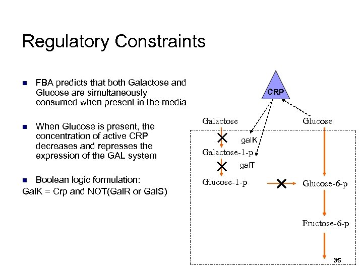 Regulatory Constraints n n FBA predicts that both Galactose and Glucose are simultaneously consumed