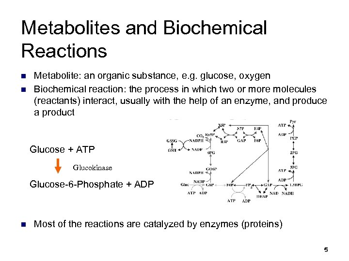 Metabolites and Biochemical Reactions n n Metabolite: an organic substance, e. g. glucose, oxygen