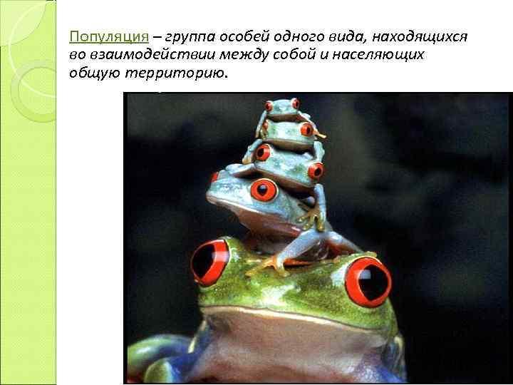 Популяция – группа особей одного вида, находящихся во взаимодействии между собой и населяющих общую
