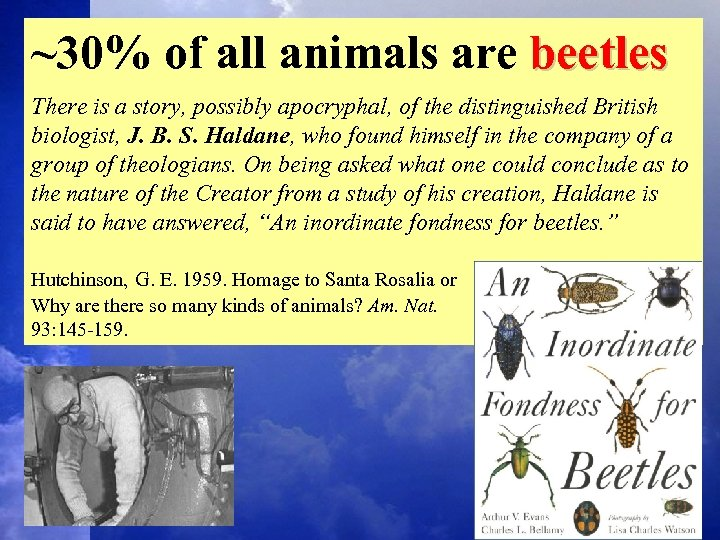 ~30% of all animals are beetles There is a story, possibly apocryphal, of the