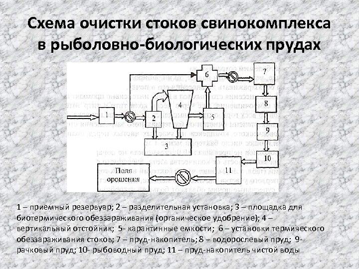 Схема очистки стоков свинокомплекса в рыболовно биологических прудах 1 – приемный резервуар; 2 –