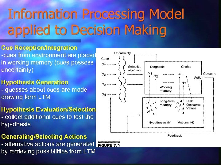 Information Processing Model applied to Decision Making Cue Reception/Integration -cues from environment are placed