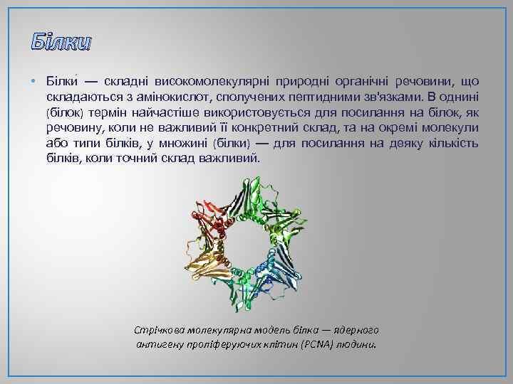 Білки • Білки — складні високомолекулярні природні органічні речовини, що складаються з амінокислот, сполучених