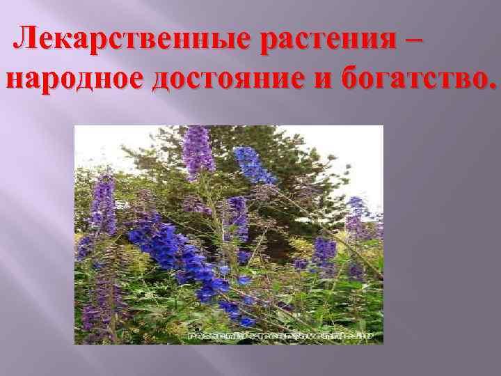Лекарственные растения – народное достояние и богатство.