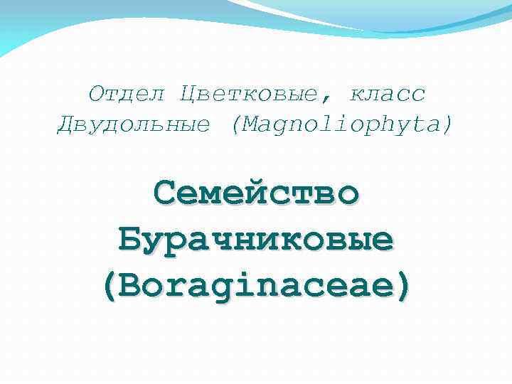 Отдел Цветковые, класс Двудольные (Magnoliophyta) Семейство Бурачниковые (Boraginaceae)