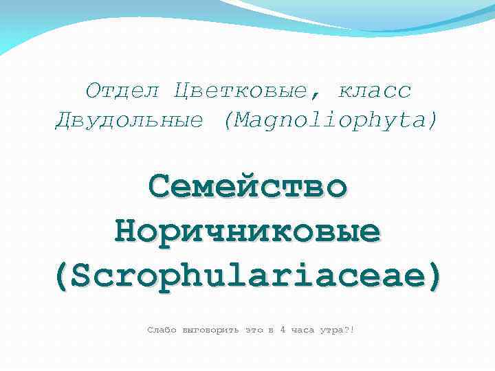 Отдел Цветковые, класс Двудольные (Magnoliophyta) Семейство Норичниковые (Scrophulariaceae) Слабо выговорить это в 4 часа