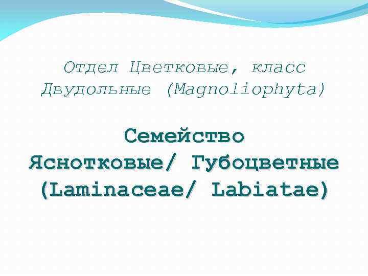 Отдел Цветковые, класс Двудольные (Magnoliophyta) Семейство Яснотковые/ Губоцветные (Laminaceae/ Labiatae)