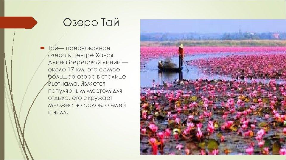 Озеро Тай— пресноводное озеро в центре Ханоя. Длина береговой линии — около 17 км,