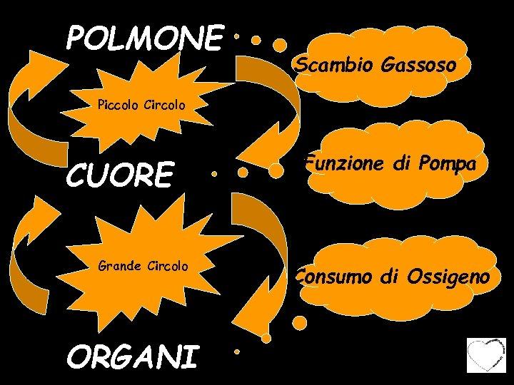 POLMONE Scambio Gassoso Piccolo Circolo CUORE Grande Circolo ORGANI Funzione di Pompa Consumo di