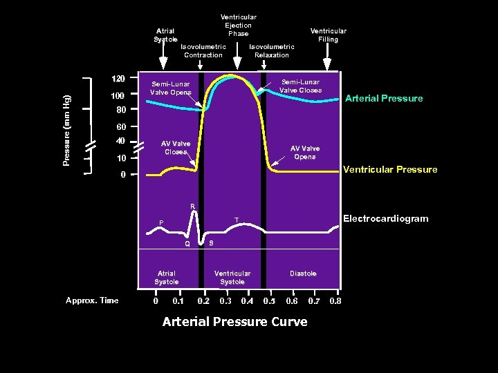 Atrial Systole Pressure (mm Hg) 120 100 Ventricular Ejection Phase Isovolumetric Contraction Isovolumetric Relaxation