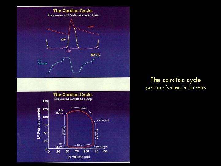 The cardiac cycle pressure/volume V sin ratio