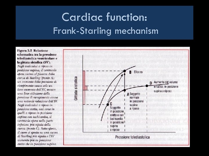 Cardiac function: Frank-Starling mechanism