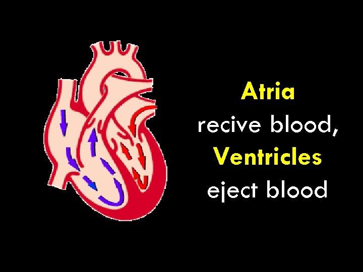 Atria recive blood, Ventricles eject blood