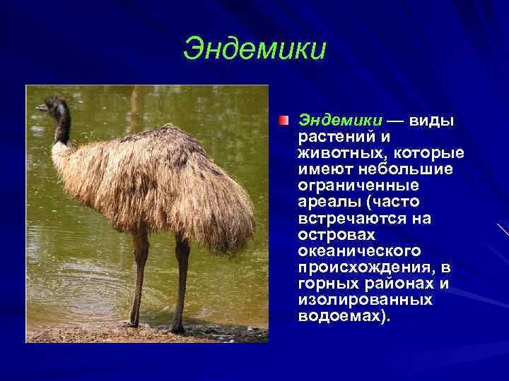 друзья эндемики россии животные и растения годы сосредоточен фотографии
